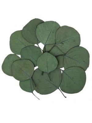 Aidot Eukalyptuksen Lehdet, 15kpl