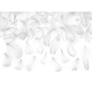 Valkoiset höyhenet.